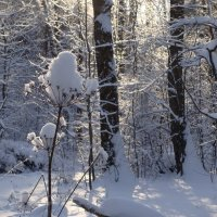 Зимний лес. :: Antonina