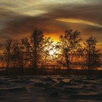 Вечернее зимнее... :: Светлана