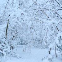 Зима :: Надежда Акушко