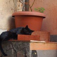 Кошки. Сиеста в Кастельмола, Сицилия :: Сергей К