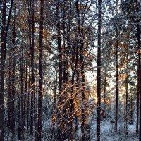 В зимнем сиянии :: Ольга