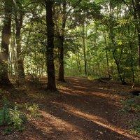 Утро в лесу :: Alexander