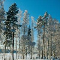 мороз и солнце :: Вадим Гай