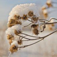 Колючки. :: Виктор Евстратов