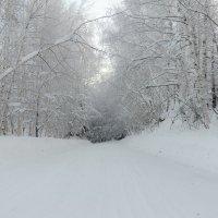 Снежная дорога :: Светлана