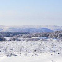 зима в придонье :: татьяна