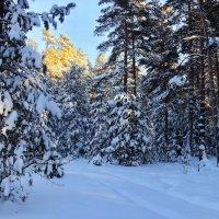 Звенело тишиной морозистое эхо... :: Лесо-Вед (Баранов)
