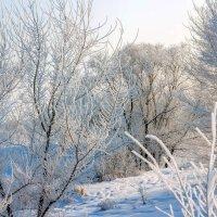Зимняя красота :: Юрий Стародубцев