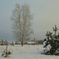 Берёзка. :: Николай Масляев