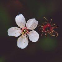 Flowers :: Kamilla Gazizova