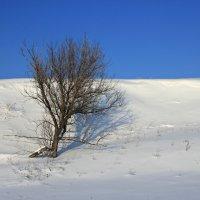 Одиночество :: Larissa Sergeeva