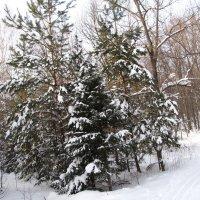 Зимний лес :: Денис Геранькин