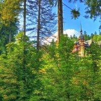 сказка в Венском лесу :: Vadim Zharkov