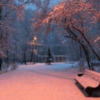 Утро в зимнем парке :: Мария Кухта