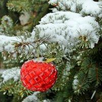 «Яблоко в снегу». :: Валентина ツ ღ✿ღ