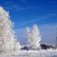 Зимний сон. :: оля san-alondra