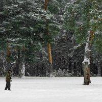 А снег идёт! :: Владимир Шошин