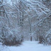 Зима. :: Наташа Шамаева