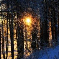 Солнечный лес :: Евгений Карелин