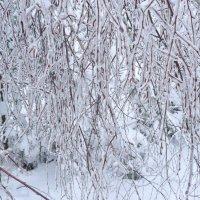 Зима. :: Надежда Акушко