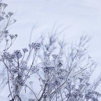 Зимние узоры :: Aнна Зарубина