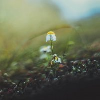 Один в поле.. :: Виктория Воробьёва