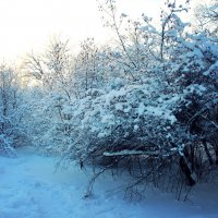 Снег :: Мари ^_^ !