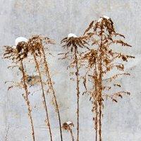 Цветы зимы :: Gamza ..