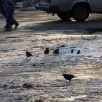Зима - холода :: Наталья Джикидзе (Берёзина)