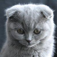 Малышка Ася :: Ольга Мансурова