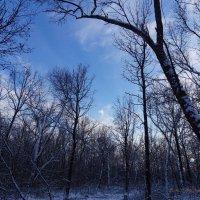 Зачарованный лес :: Igor Arabadzhy