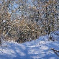 И опять пришла зима :: Игорь Сикорский