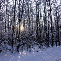 Лыжня в Ромашково :: Виктор М