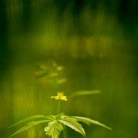 В весенних травах... :: Андрей Ветров