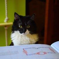 Кот ученый :) :: Nastya 777