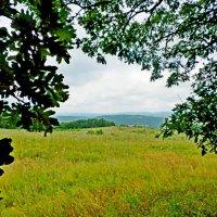 лесная поляна :: Люша