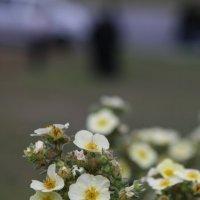 Горные цветы в Западной Сибири :: Сергей