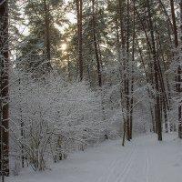Лыжня в бору :: Виктор