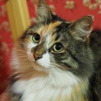 Просто кошка :: Сергей Захаров