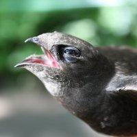 Боль птицы :: Антонина