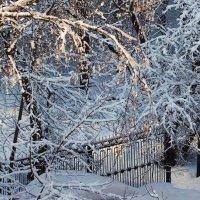 Снежно :: Надежда Бахолдина