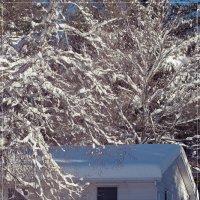 ...жила зима в избушке... :: Елена Леневенко