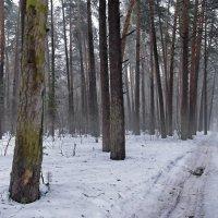 Сменил мороз январский март... :: Лесо-Вед (Баранов)