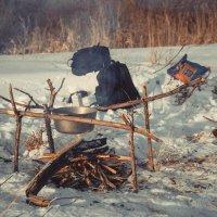 выход за город.чаек на морозе. :: lev