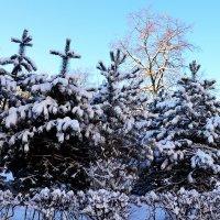 Зимний день :: Владимир Болдырев