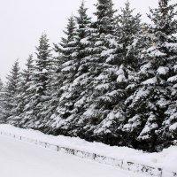 Снегопад :: Светлана Ку
