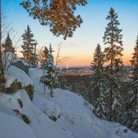 Деревья на скалах :: vladimir