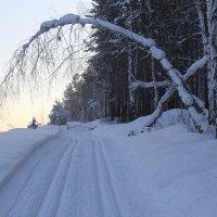Лыжня. :: Андрей