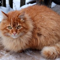 заметает зима :: Нина
