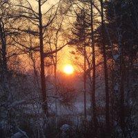 На закате. :: Андрей
